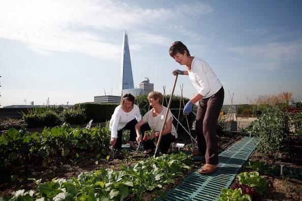 Con gli orti in terrazzo il risparmio è garantito! | Harpo spa