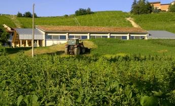 cantina agricola val del prete - estensivo piano a prato naturale - inclinato a sedum