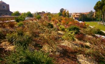 orto botanico - estensivo inclinato