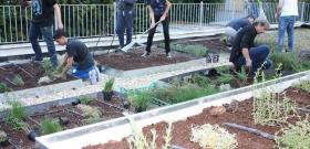 Scuola   Liceo Keplero: a Roma i ragazzi studiano sul tetto verde