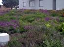 Verdepensile - Coperture o aree a verde di alto valore ecologico - Harpo